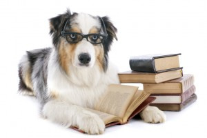 australian shepherd and books