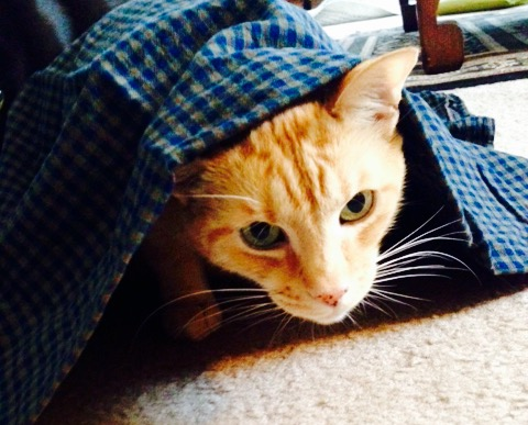 caturday cat clan
