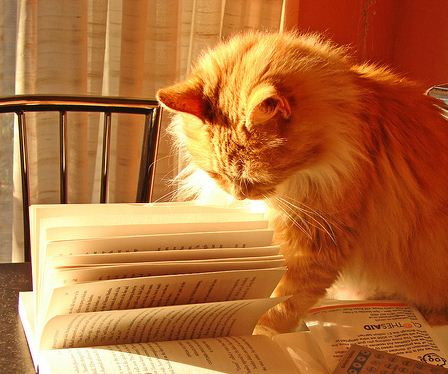 Ginger reading book