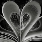 kitten heart pages