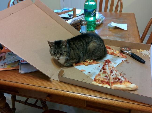 pizzacat1
