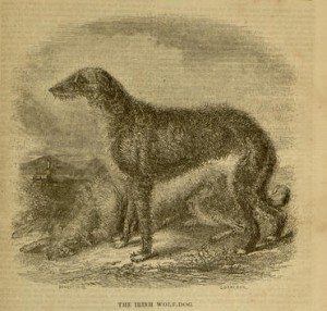 """The Irish Wolfhound"", illustration, [353] p., The Irish Penny Journal, v.1, no. 45, May 8, 1841"