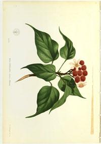flora3_ed1
