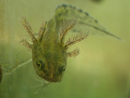 frog-blog