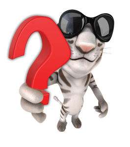 WILDCAT QUESTION MARK2