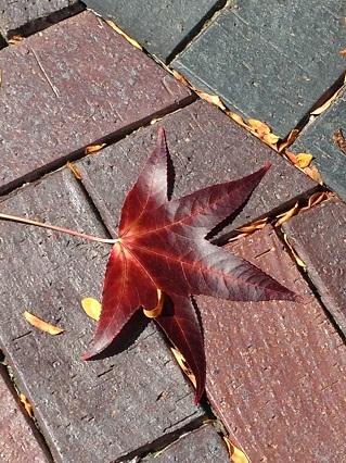 Leaf ed