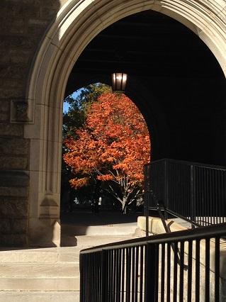 Tree - Arch ed