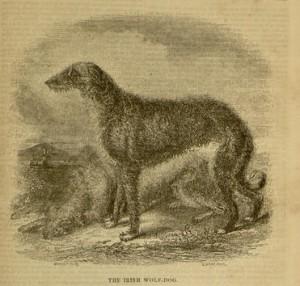 """The Irish Wolfhound"", illustration, [353] p., The Irish Penny Journal, v.1, no. 45, May 8, 1841"