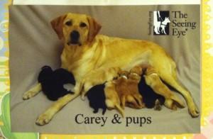 Carey Nellie pups