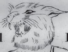 Wildcat 1969