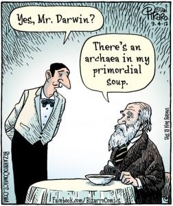 darwin soup