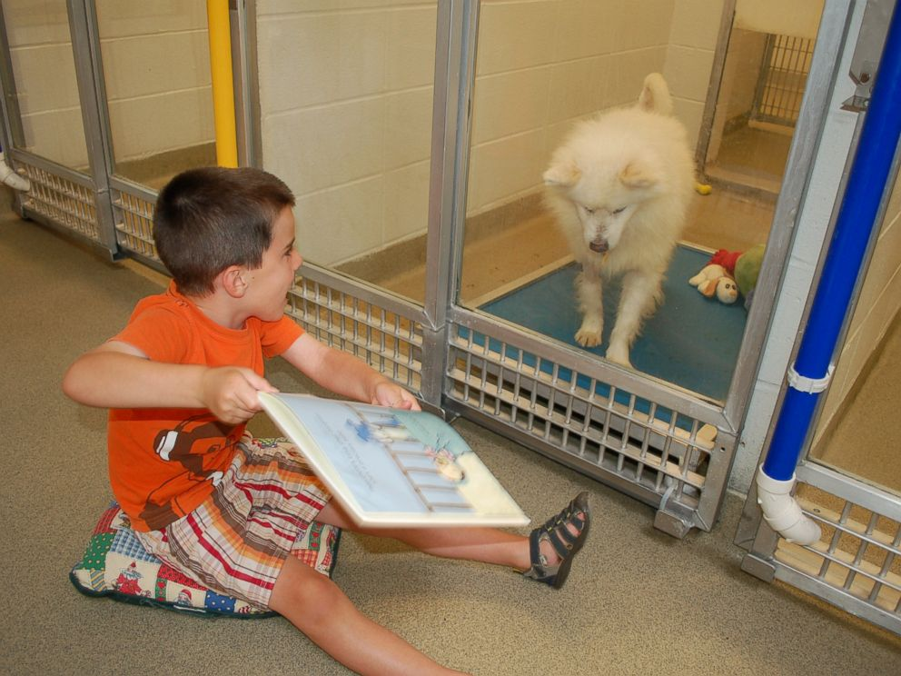 little boy reads to shy shelter dog through the glass.