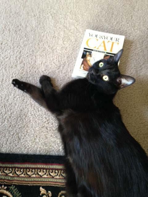 caturday reading