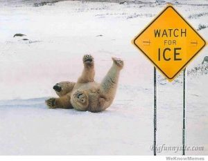 Ice, polar bear, ICE events, winter