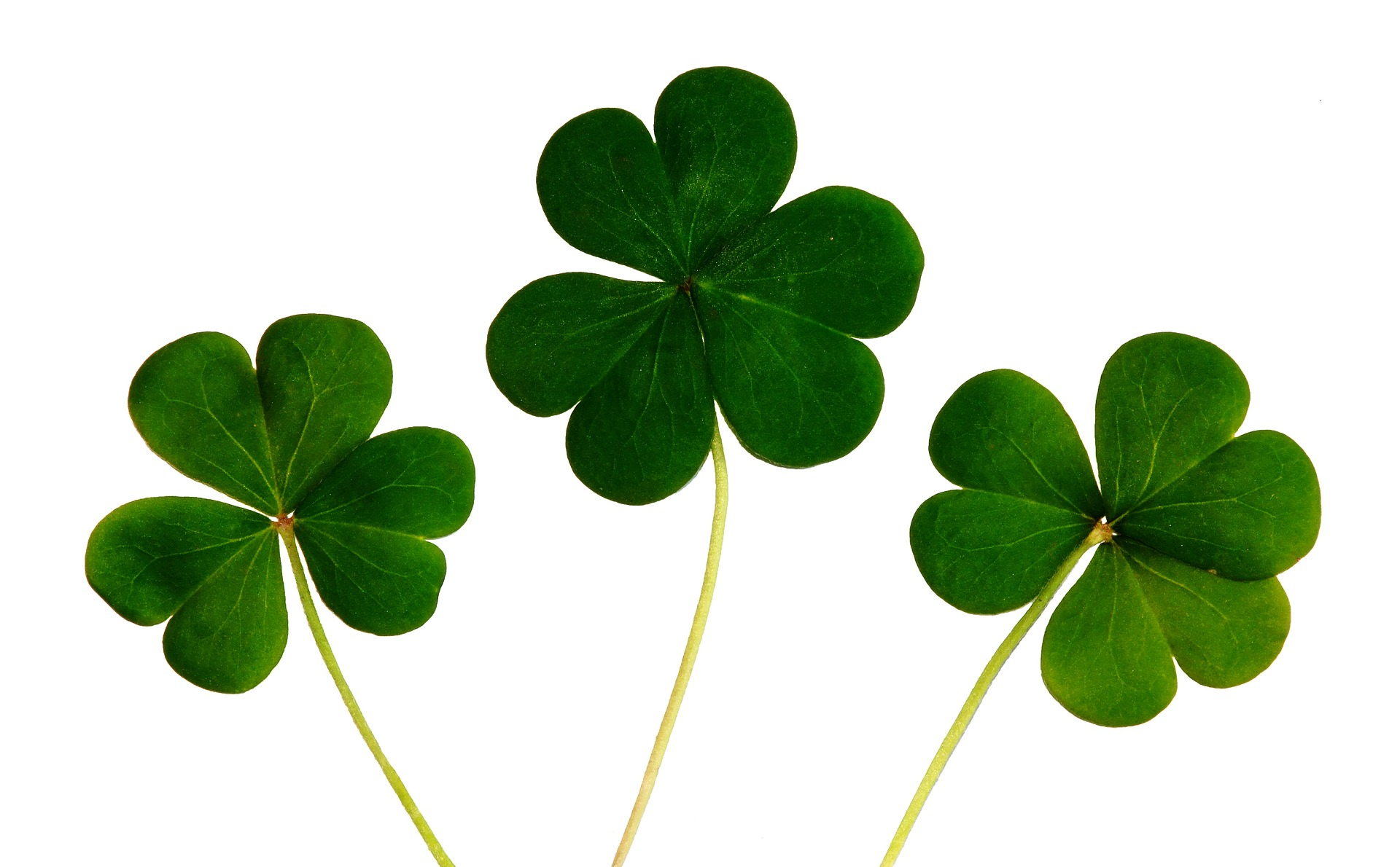 yhree green clovers