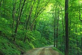 woods-1600782__180