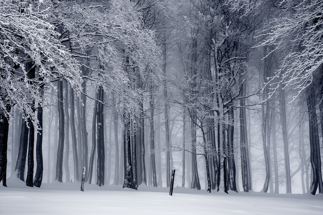 winter-1820987_1280