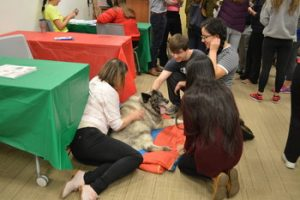 Students, Villanova, stress-relief, stress, pals for life, therapy, animals
