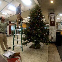 Fun Friday: Falvey's Fabulous Time Lapse Tree Build