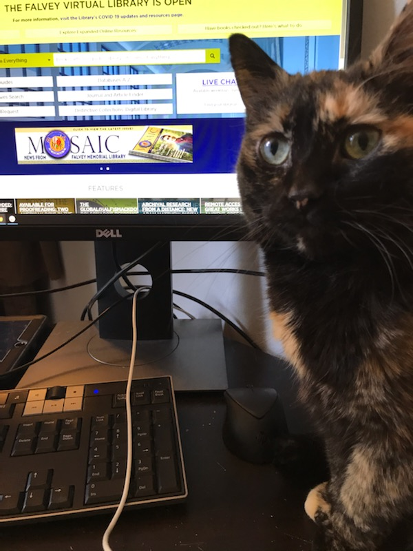 Photo of Librarian Sarah Wingo's cat, Arya, sitting in front of a computer scree.