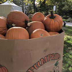 Foto Friday: Pumpkin Spice