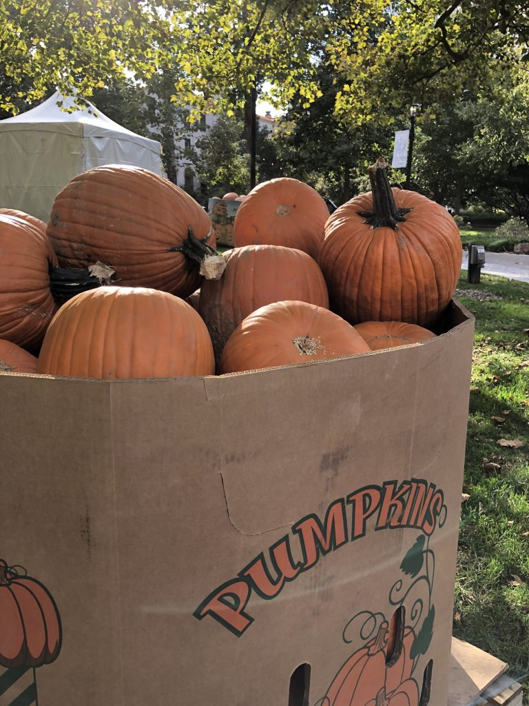 Photo of a large box of pumpkins on Villanova's campus.