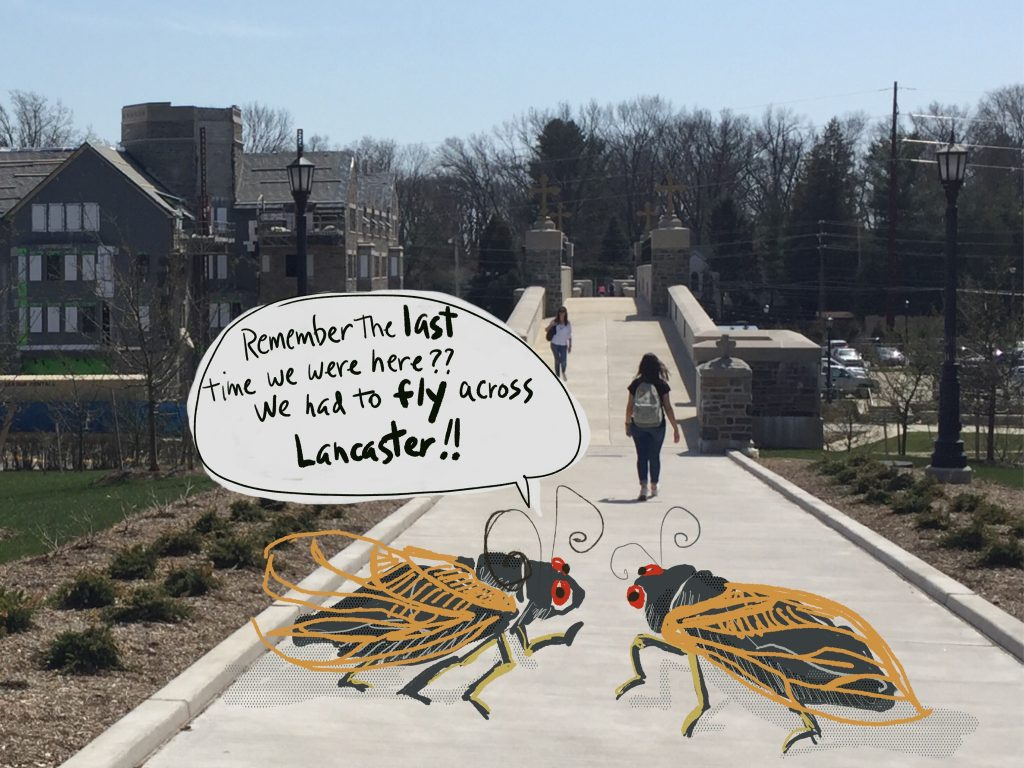 Image of Brood-X cicadas on Villanova's campus.