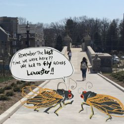 Welcome Back, Brood X Cicadas—Looking Back to Past Emergences