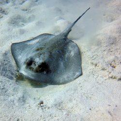 Everything But the Shark Week: Stingrays