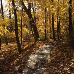 Weekend Recs: Spooky Strolls