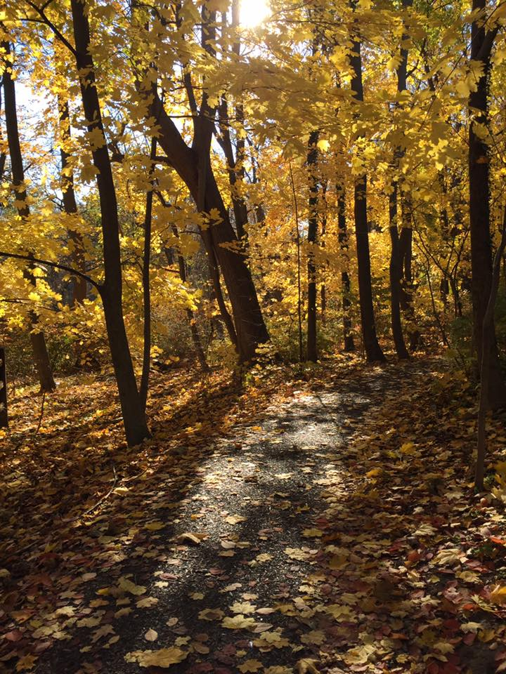 Image of fall foliage at the Haverford College nature trail.