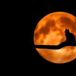 Cat in the Stax: What's Scarier than Halloween?